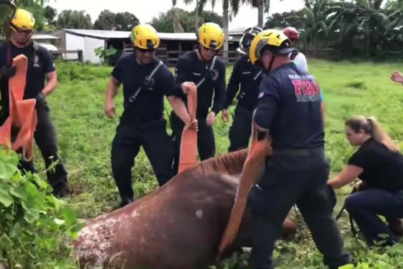 Stuck horse hoisted from well in Florida field